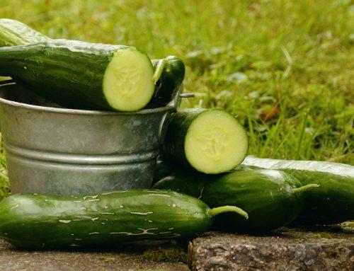 Verkoelende snack tijdens warm weer: de komkommer