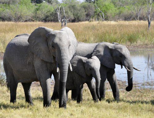 """""""Je lijkt wel een olifant mam!"""""""